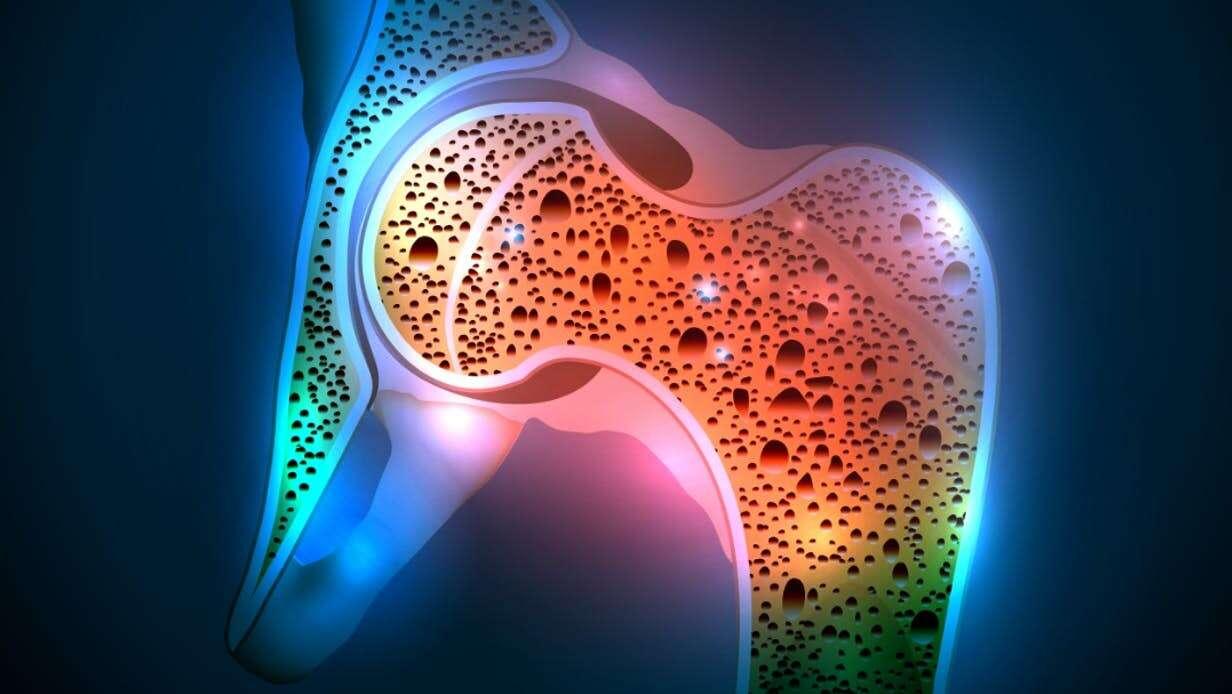 osteoporoza, leczenie osteoporozy, neurony osteoporoza, mózg osteoporoza