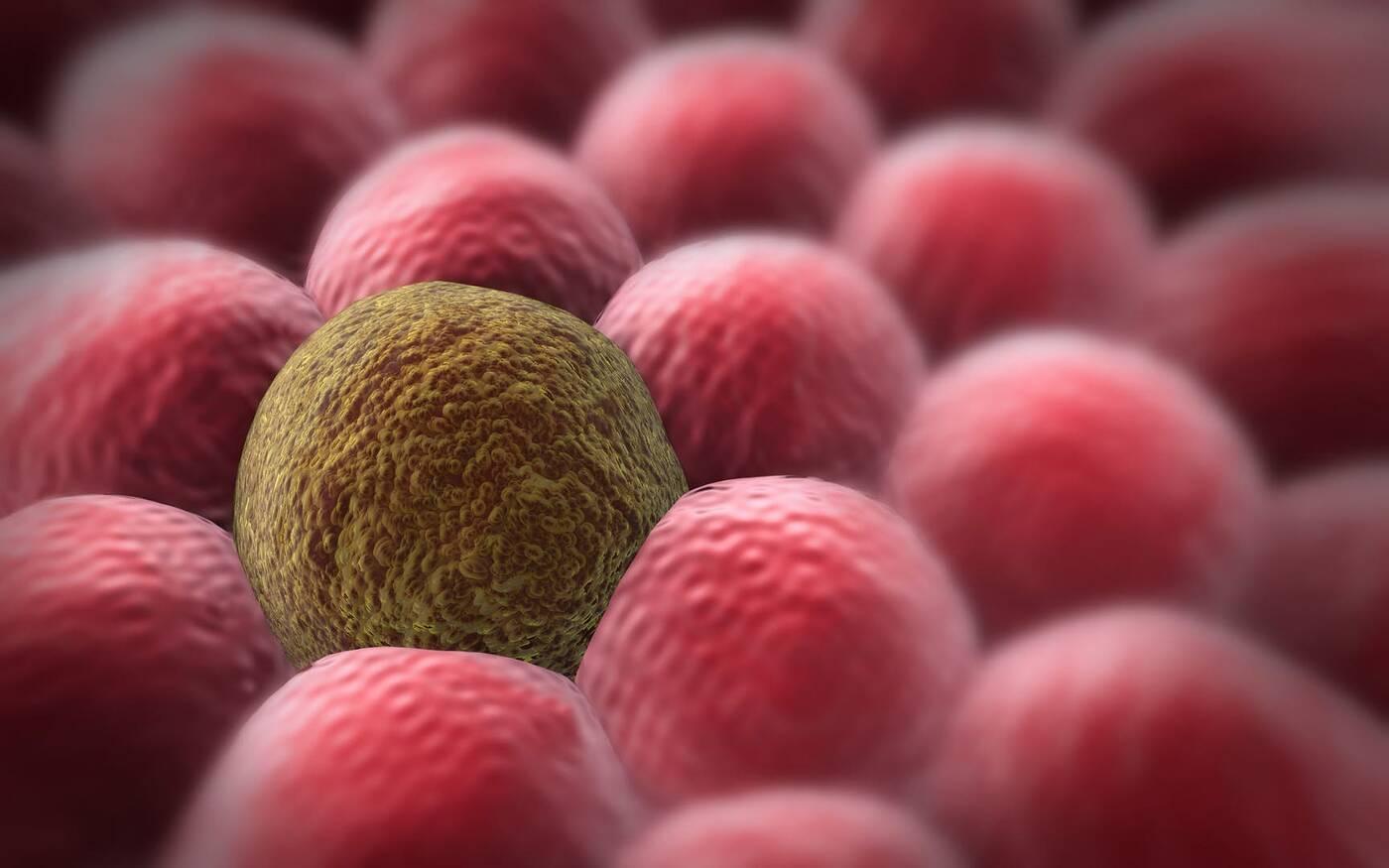 Narzędzie odczytujące historię życia komórek rakowych