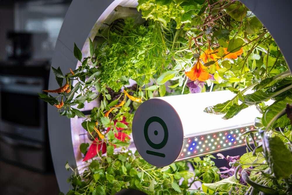 Jeszcze łatwiejsza uprawa roślin z ogródkiem OGarden Smart do mieszkania