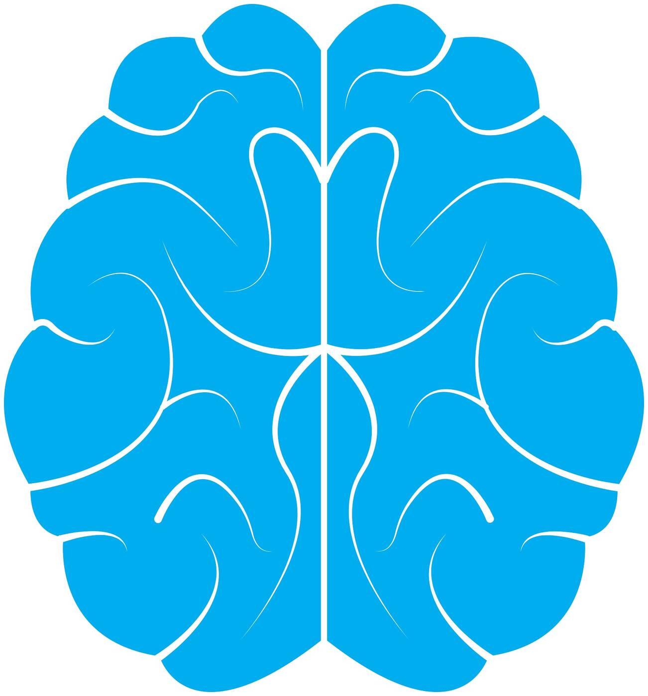 Naukowcy odkrywają kolejne różnice w budowie mózgu u mężczyzn a kobiet