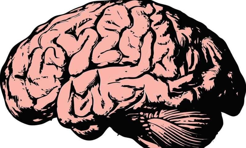 Jak ludzki mózg widzi nasz świat?
