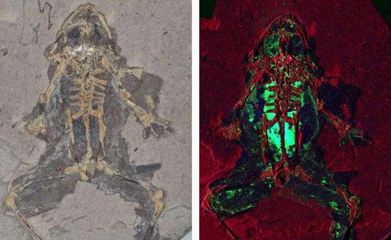 Naukowcy potrafią rekonstruować od dawna wymarłe zwierzęta