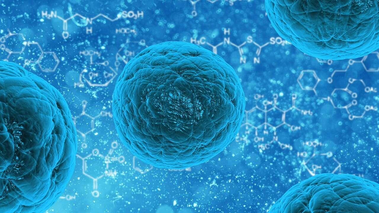 Naukowcy odkryli nowy rodzaj komórek odpornościowych