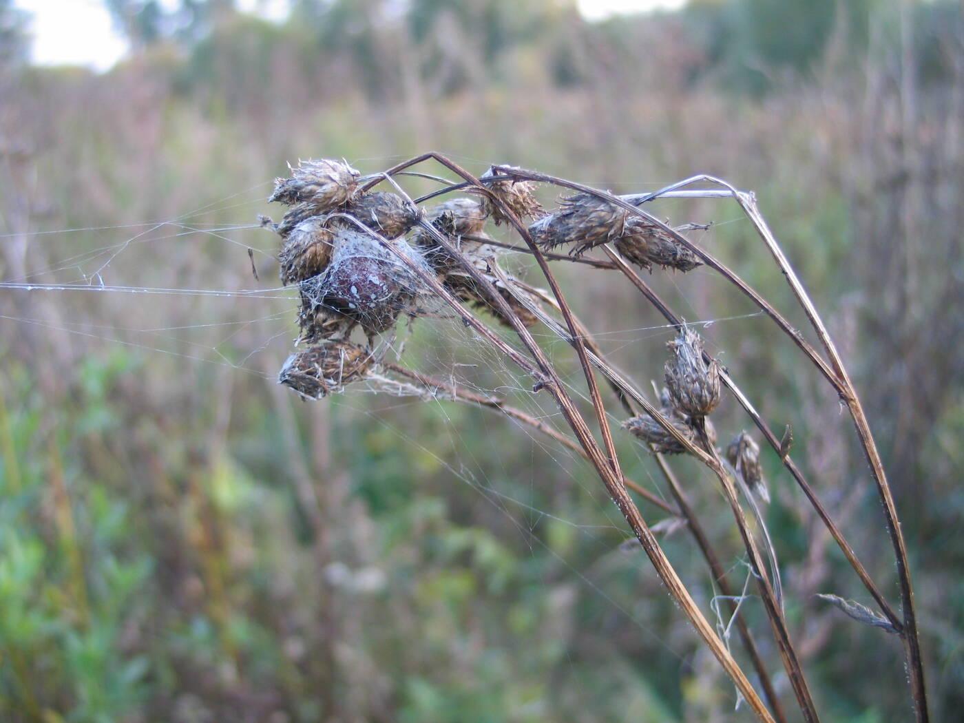 Materiał wykonany z pajęczej sieci stanowi alternatywę dla plastiku
