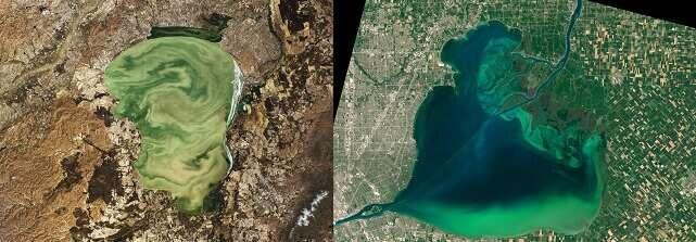 Na całym świecie dochodzi do coraz silniejszych zakwitów alg