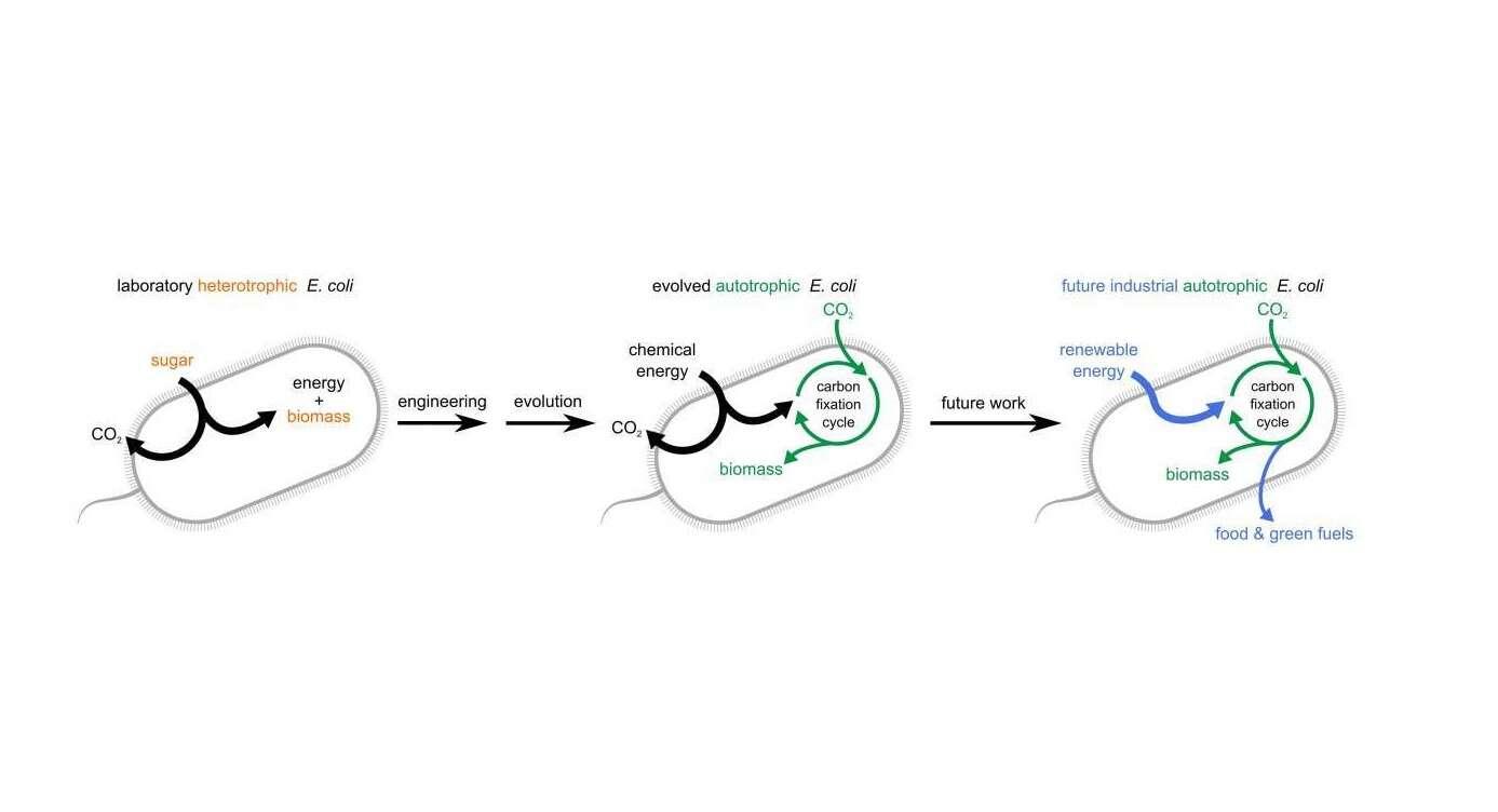 bakterie do CO2, bakterie zwalczające CO2, bakterie pochłaniające dwutlenek węgla