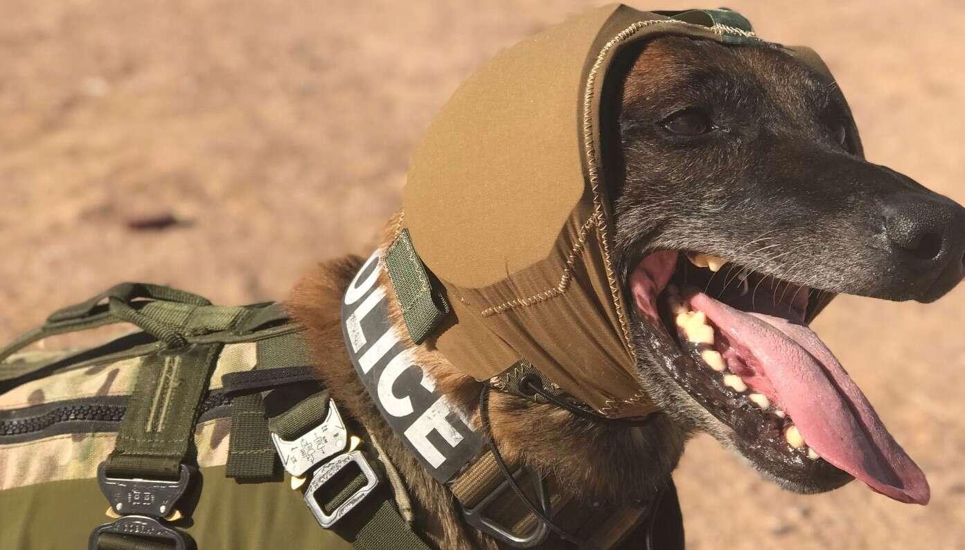 CAPS, osłona CAPS, osłona psów na froncie, słuch psów na froncie