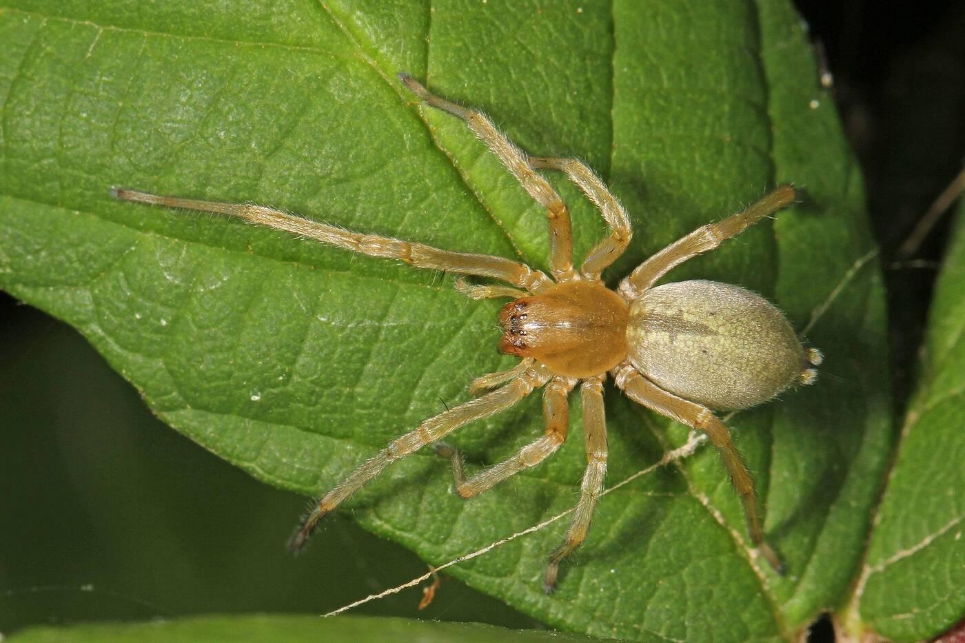 8 najbardziej jadowitych pająków świata