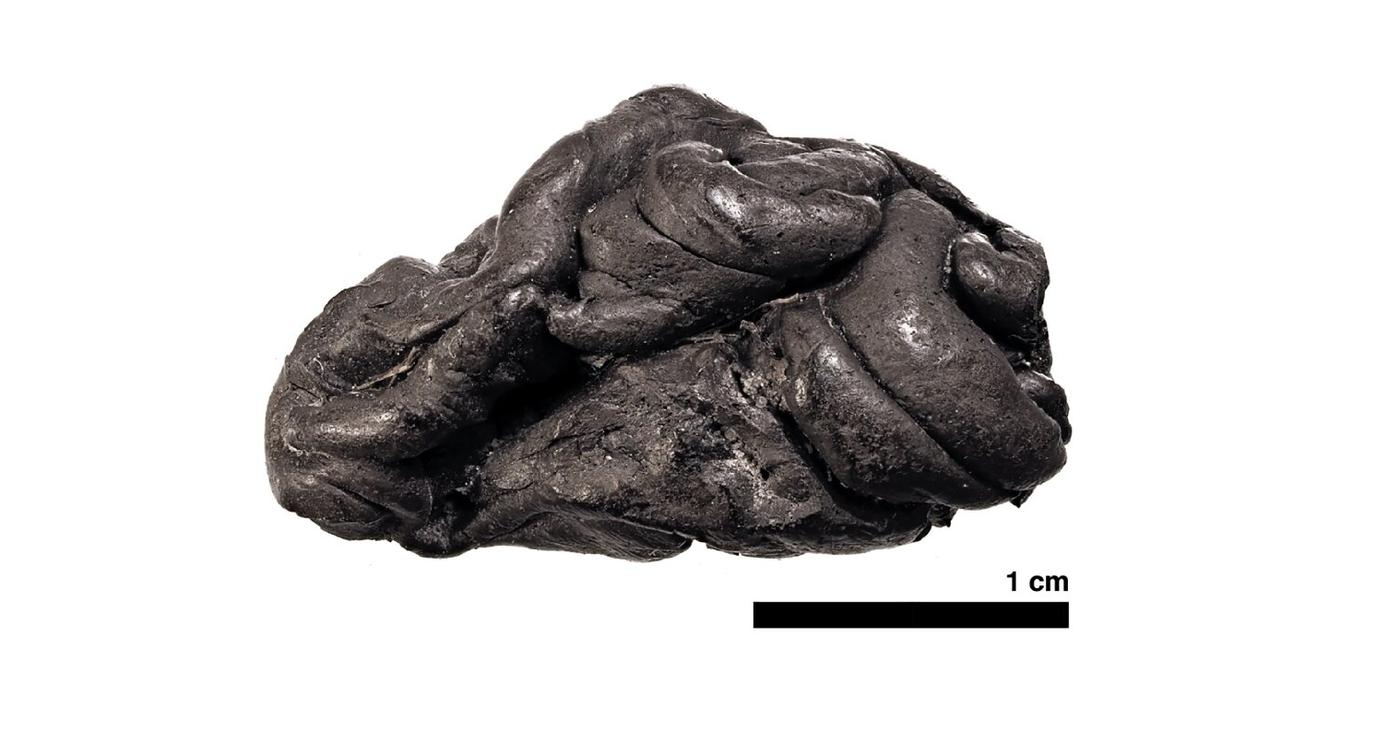 Odnaleziono ludzkie DNA na gumie do żucia sprzed ponad 5000 lat
