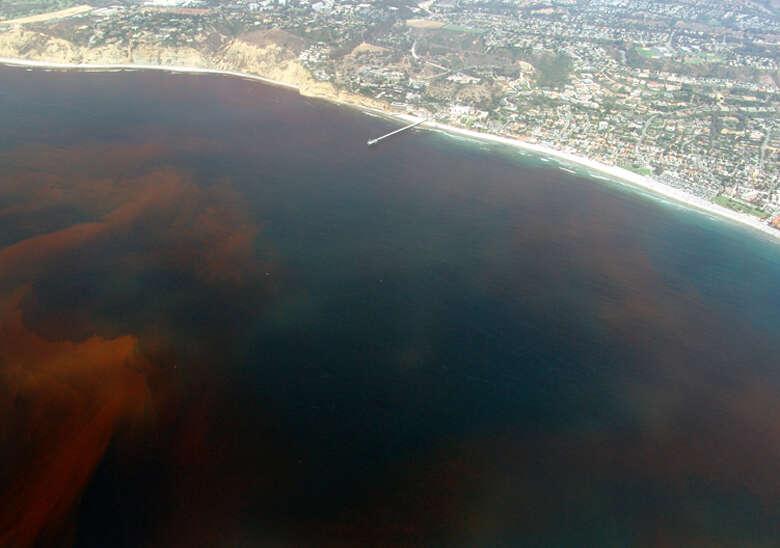 Jak wiele stref martwych wód występuje w ziemskich oceanach?