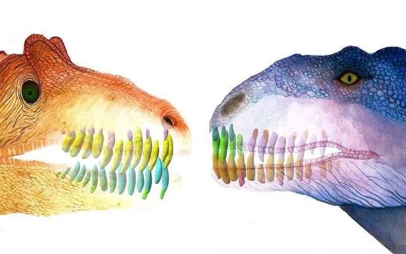 Majungasaurus, dinozaur Majungasaurusa, wymiana zębów u dinozaurów, zęby Majungasaurusa