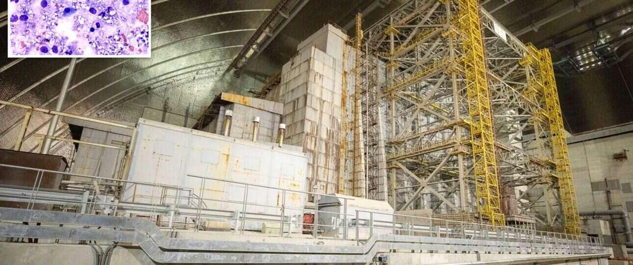 Grzyby z elektrowni w Czarnobylu pochłaniają promieniowanie