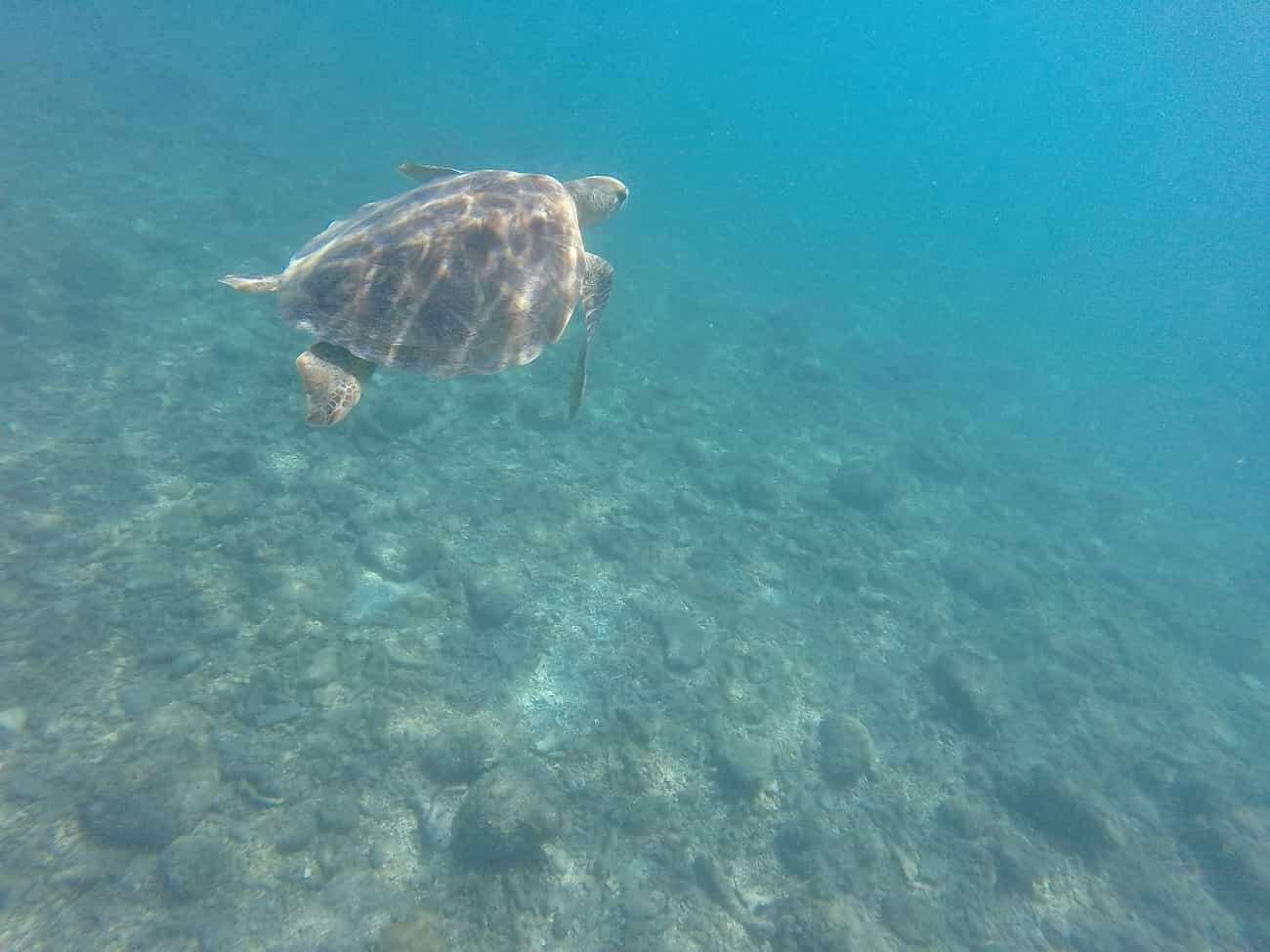 Tegoroczne blaknięcie Wielkiej Rafy Koralowej jest szczególnie dotkliwe