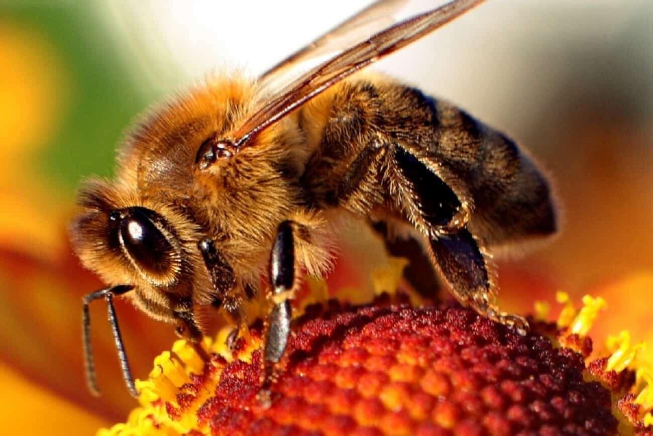 Jak pomóc pszczołom? Pojawił się nietypowy pomysł