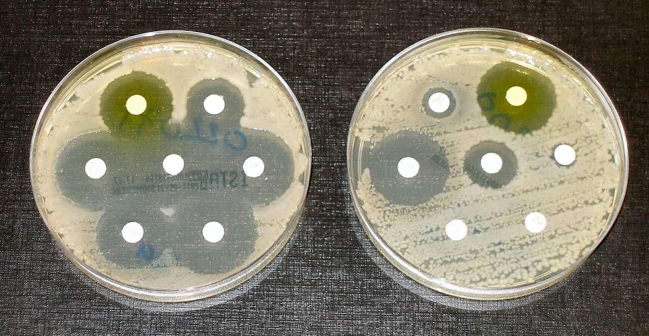 Ta bakteria może w zaskakujący sposób pomóc w ochronie środowiska