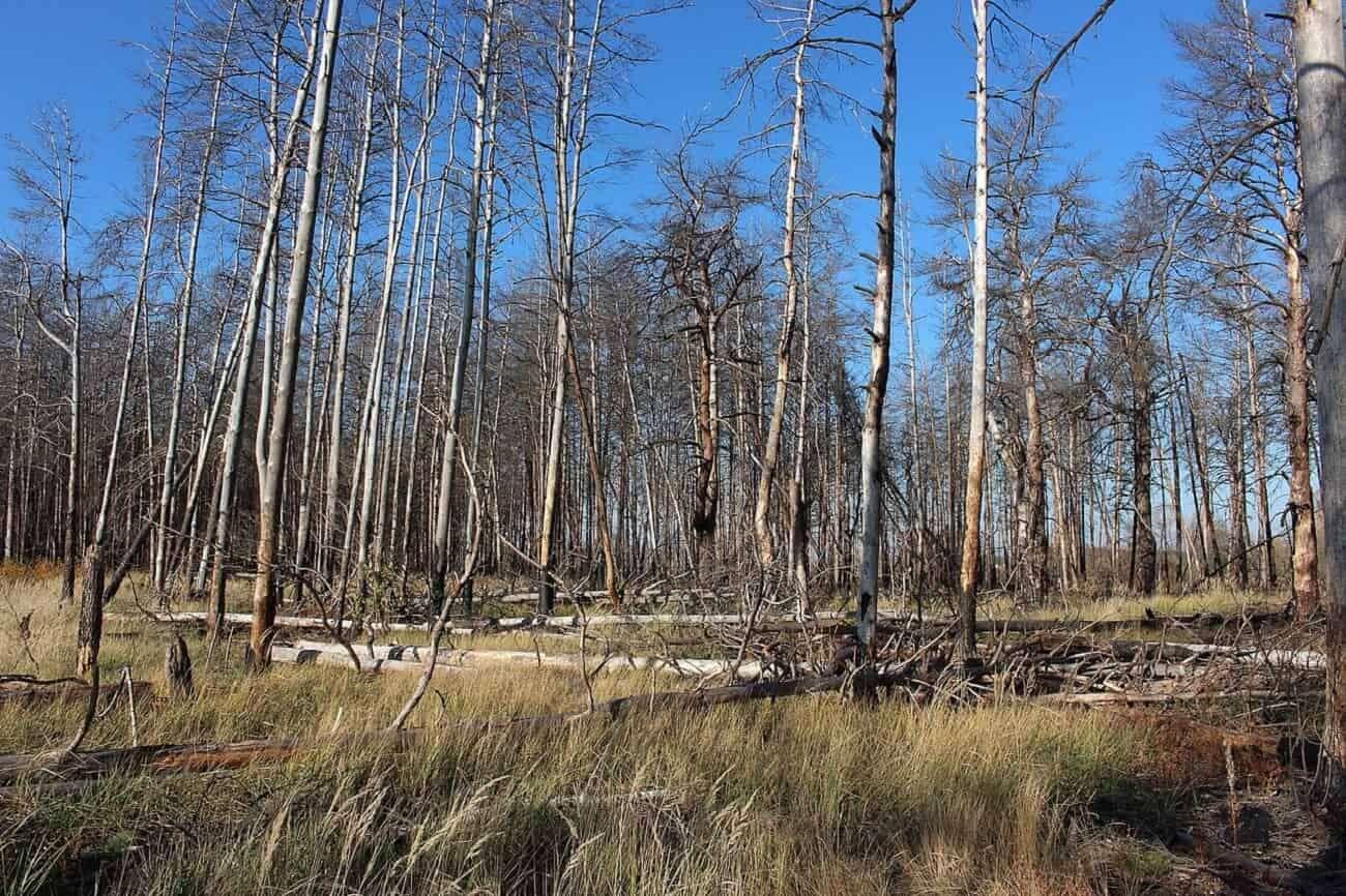 Czarnobyl może trafić na listę UNESCO. Co to będzie oznaczać w praktyce?