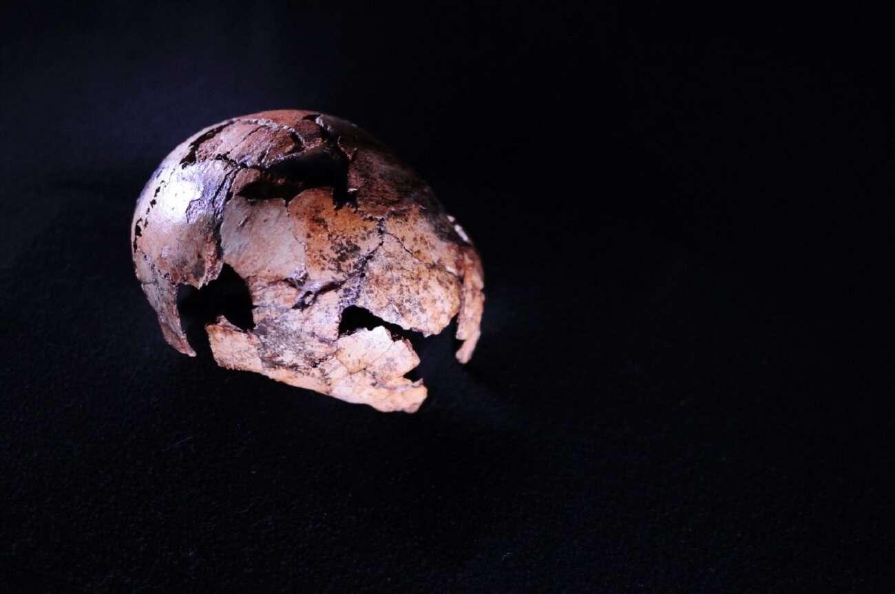 Ile gatunków człowieka istniało przed Homo sapiens?