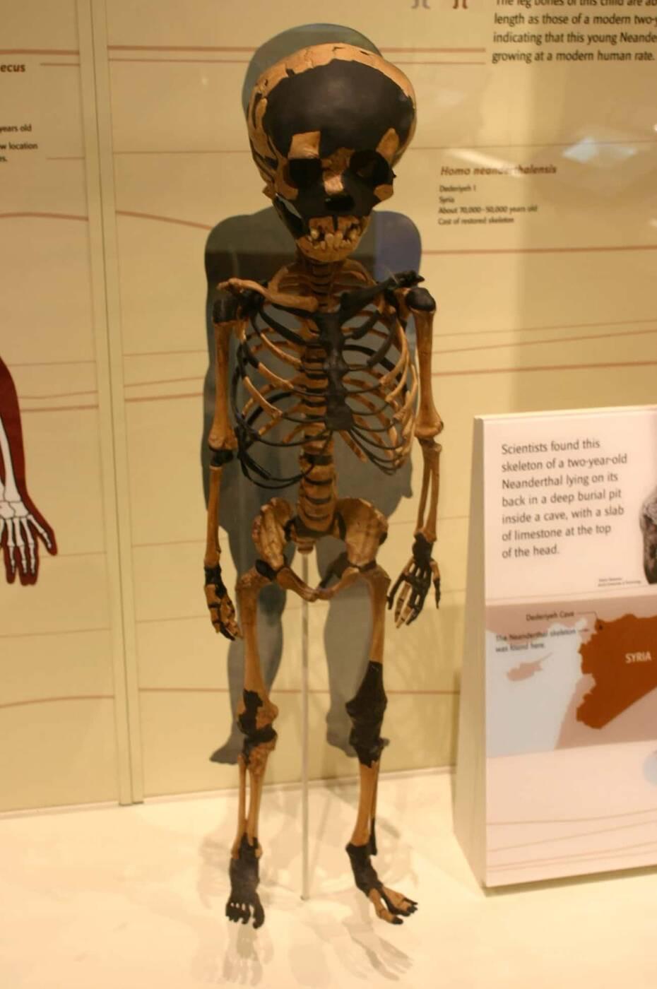 Neandertalskie geny mają zaskakujący wpływ na posiadanie dzieci