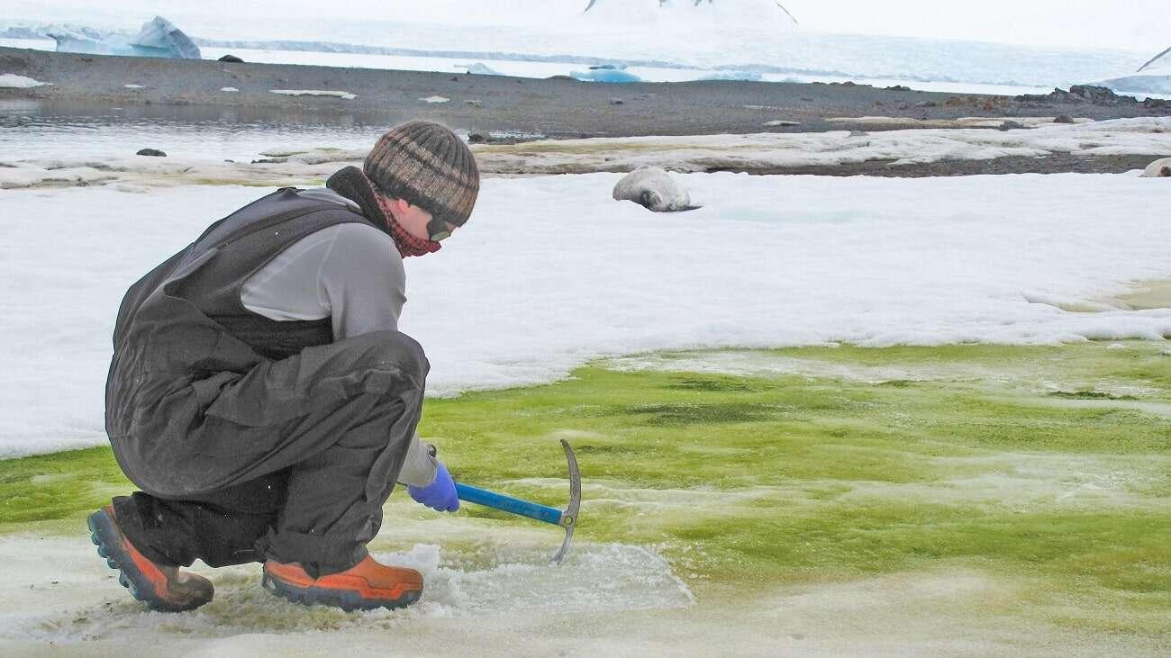 Jak bardzo zmieni się Antarktyda na skutek zmian klimatu?