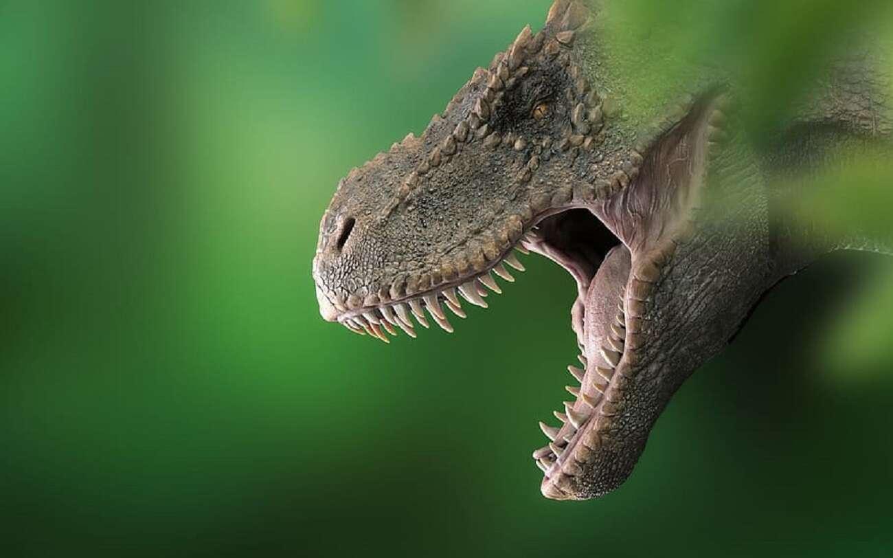Odcisk stopy dinozaura sprzed 165 mln lat został odnaleziony w zaskakujących okolicznościach
