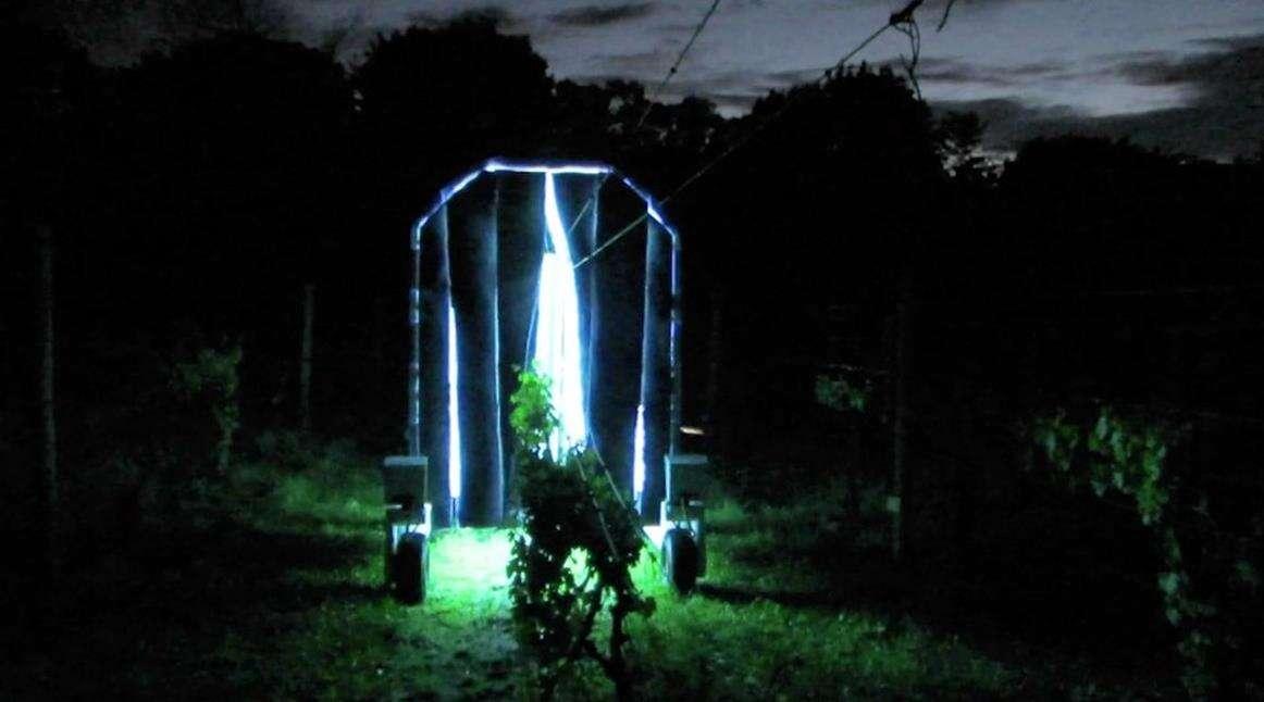 Robot emitujący promienie UV ratunkiem dla upraw