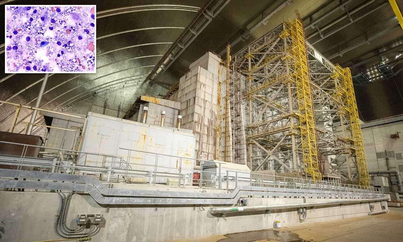 Czy grzyby z Czarnobyla pomogą w kolonizacji Marsa?