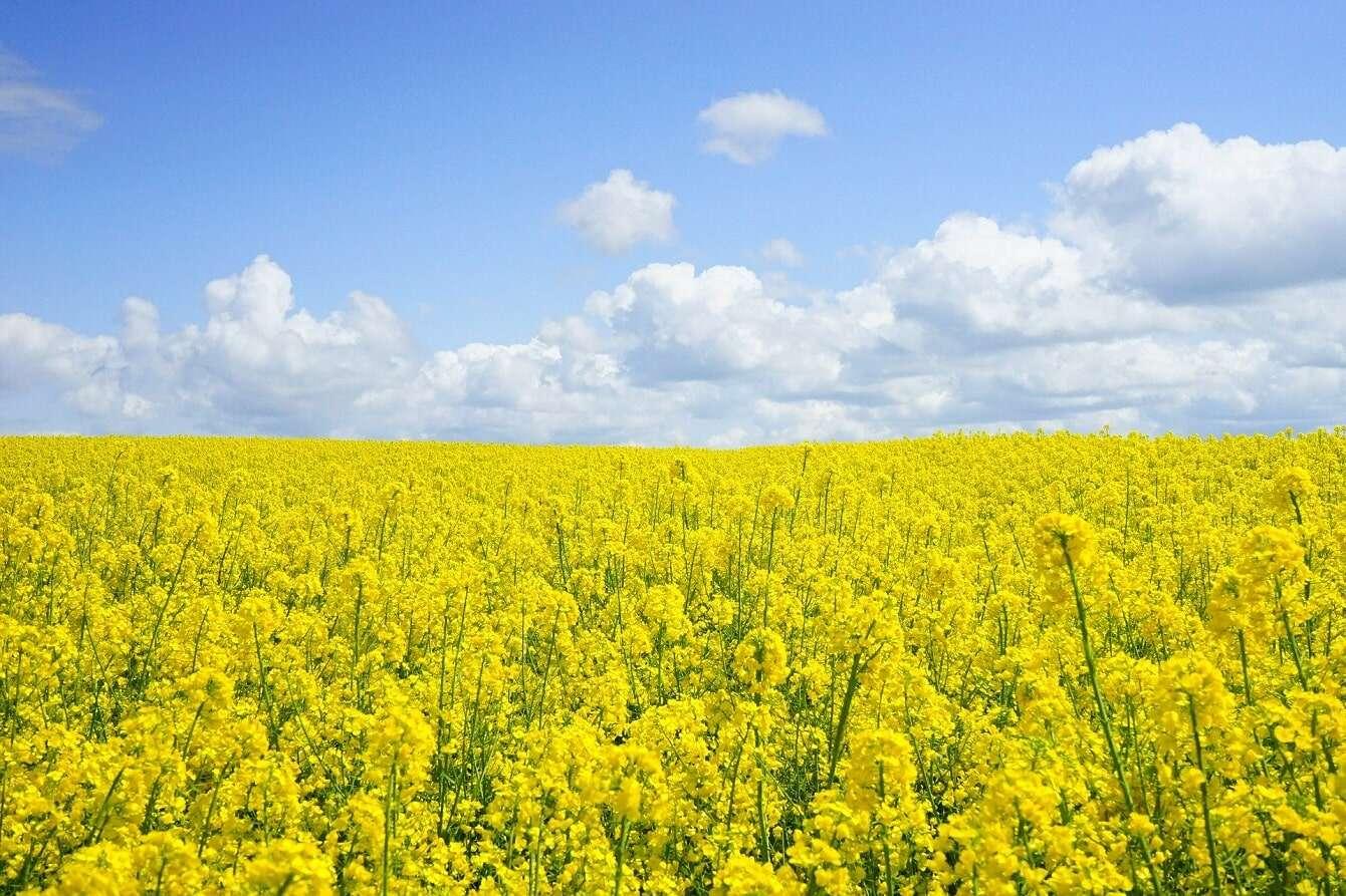 Polacy opracowali recepturę na roślinne białko i otrzymają wsparcie z Unii