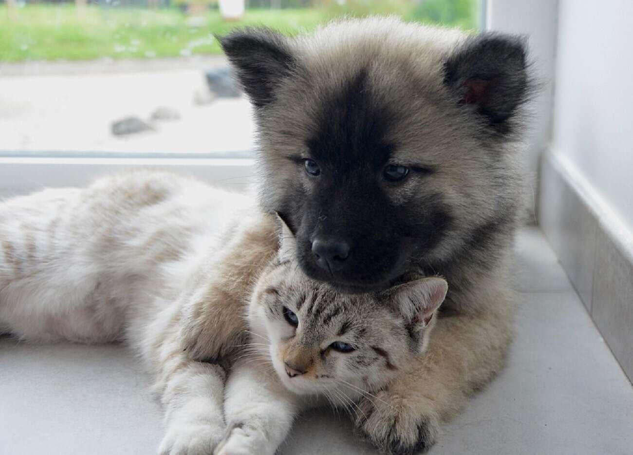 Dlaczego koty i psy mogą mieszkać pod jednym dachem?