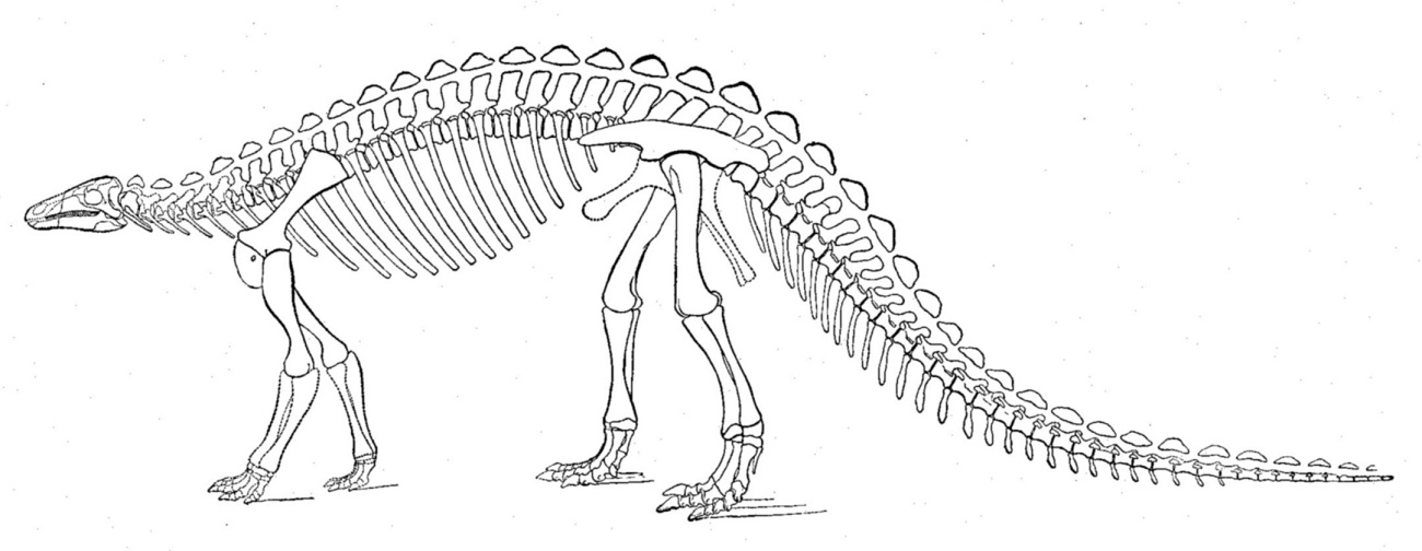Czego dowiedzieliśmy się z analizy pierwszego kompletnego szkieletu dinozaura?