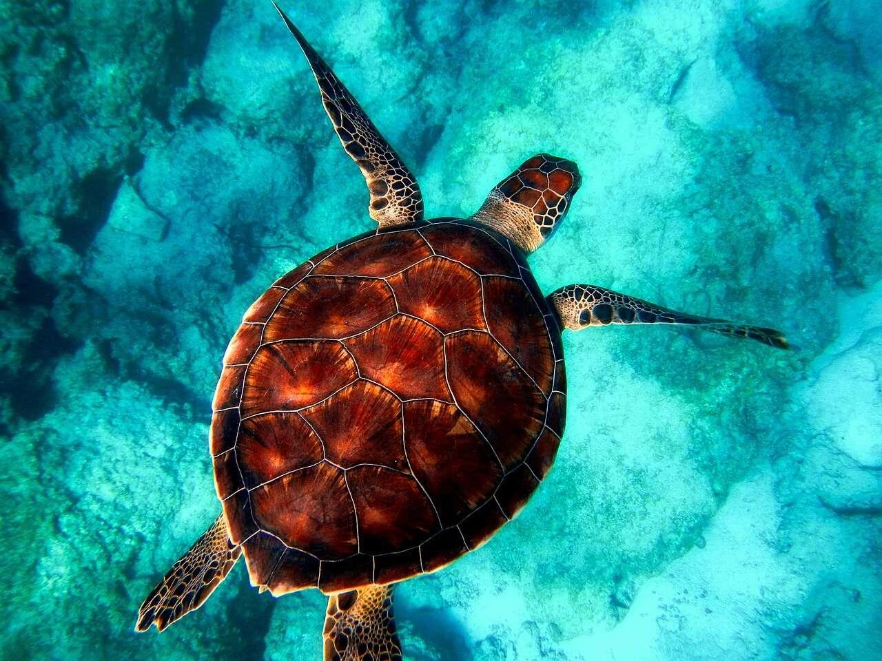 10 dziwnych gatunków zwierząt. Czy znasz je wszystkie?