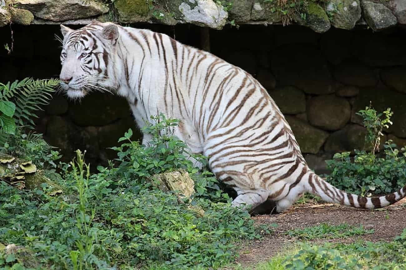 Nie uwierzycie, jak wiele ssaków wyginęło na skutek działalności ludzi
