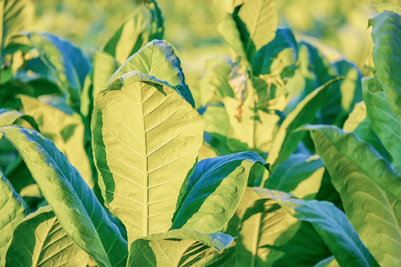 Prawie połowa roślin może wkrótce zniknąć z naszej planety