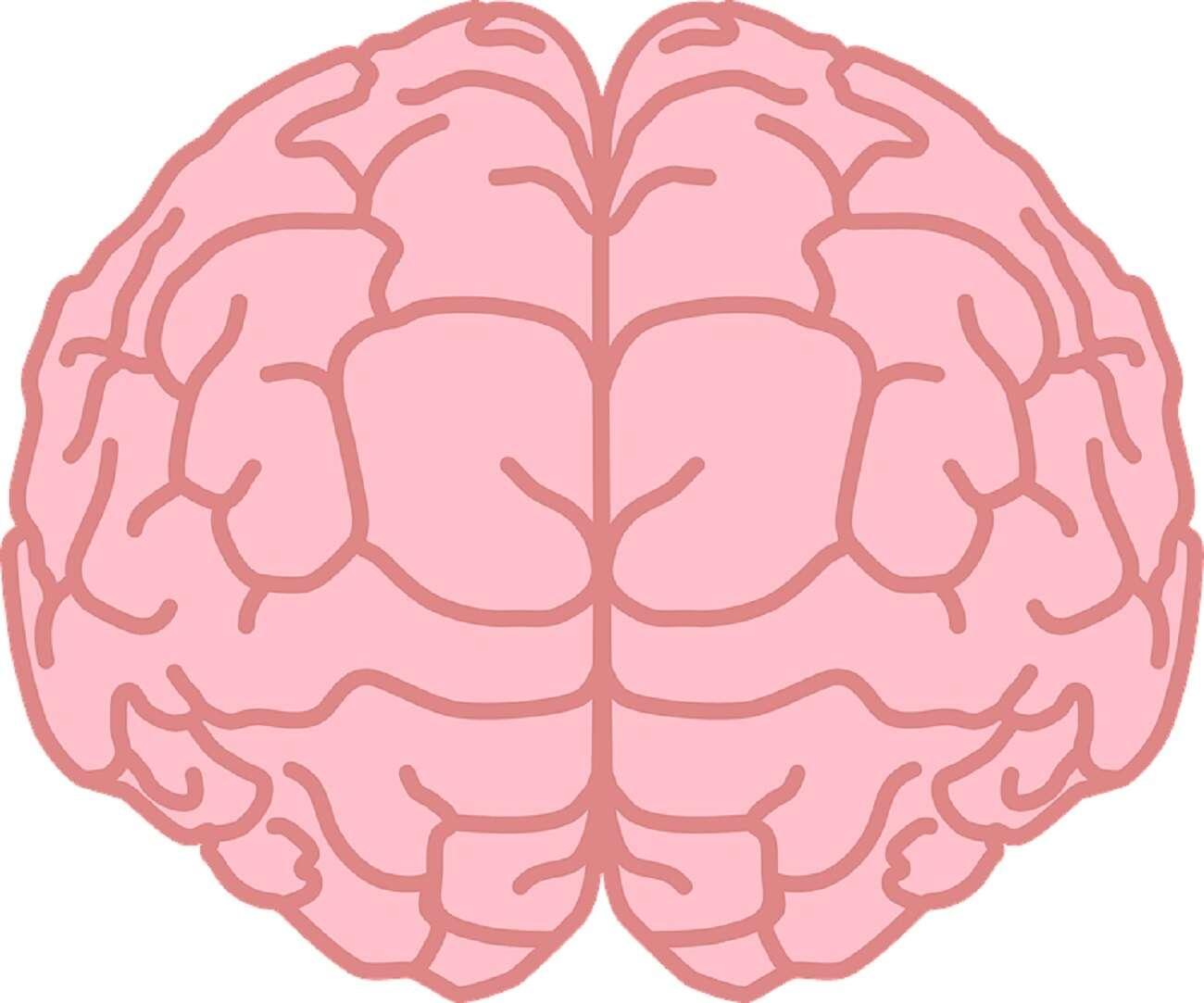 Naukowcy tworzą mózgi w laboratoriach i zadają ważne pytanie
