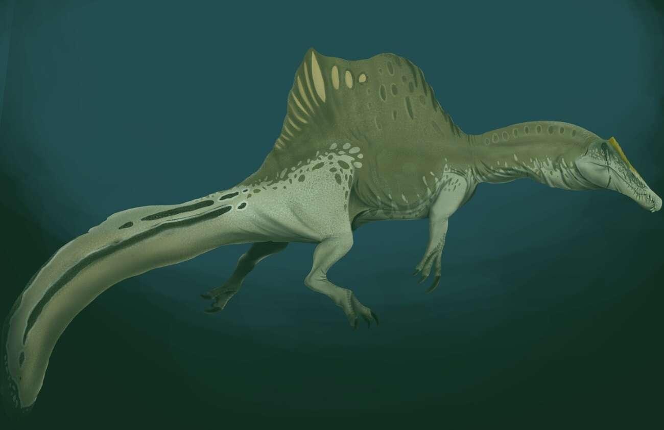 Dinozaury jednak żyły w wodzie? Ten gatunek był prawdziwym rzecznym potworem