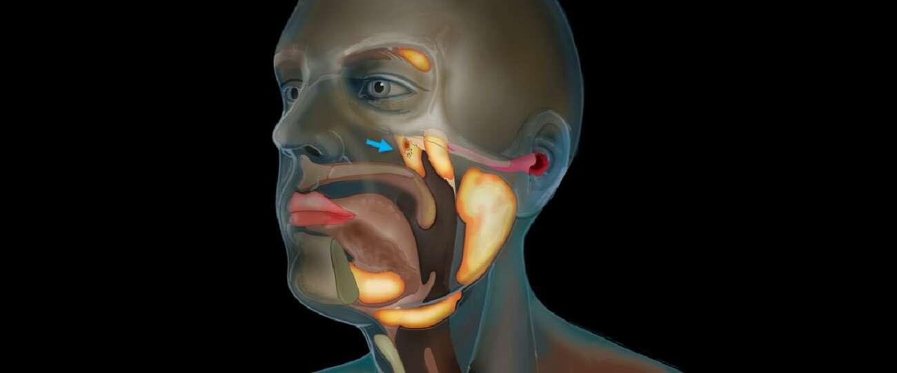 Wewnątrz ludzkiej głowy odkryto tajemniczy organ