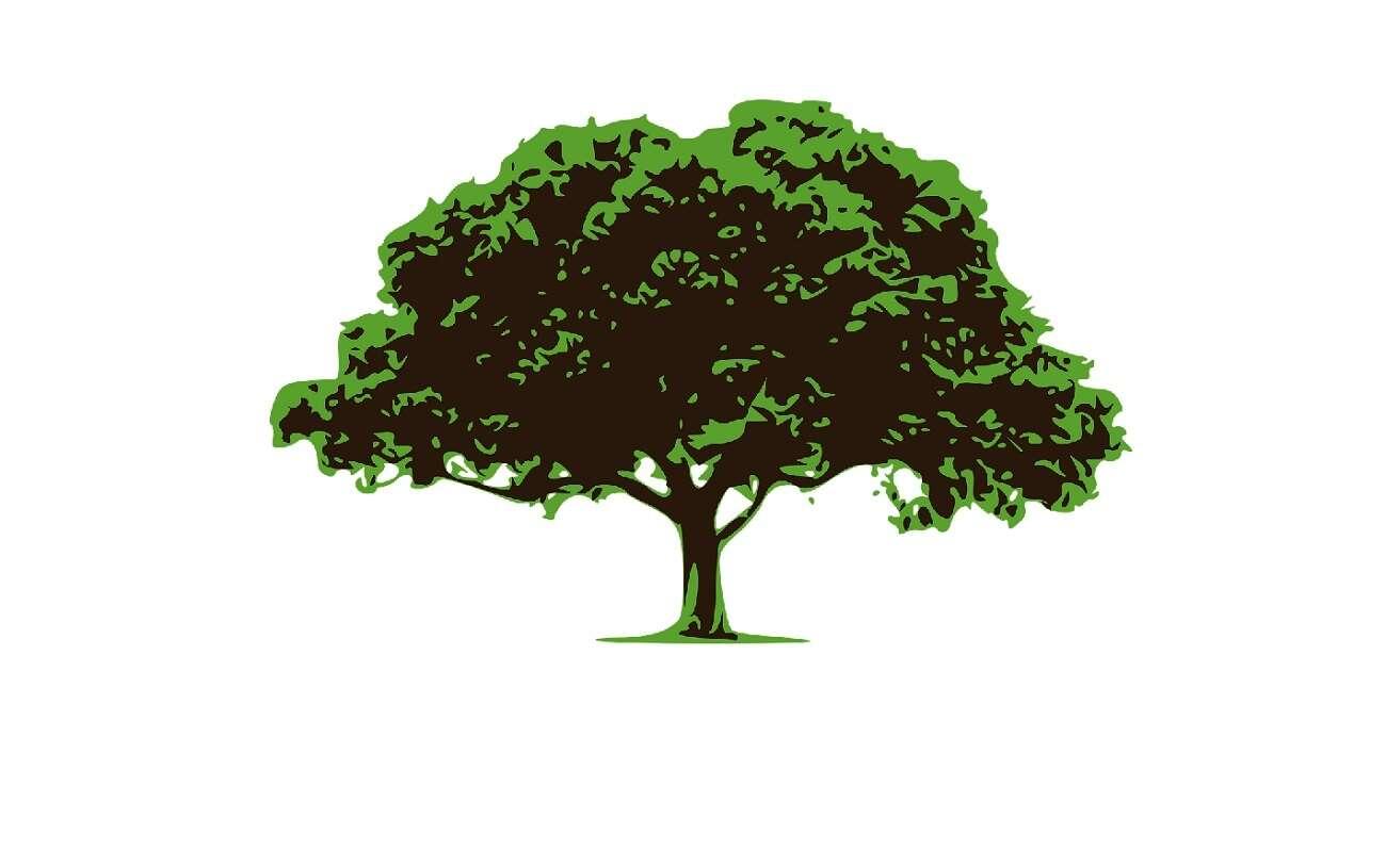 Drzewa w miastach są naprawdę ważne. I to badanie to potwierdza