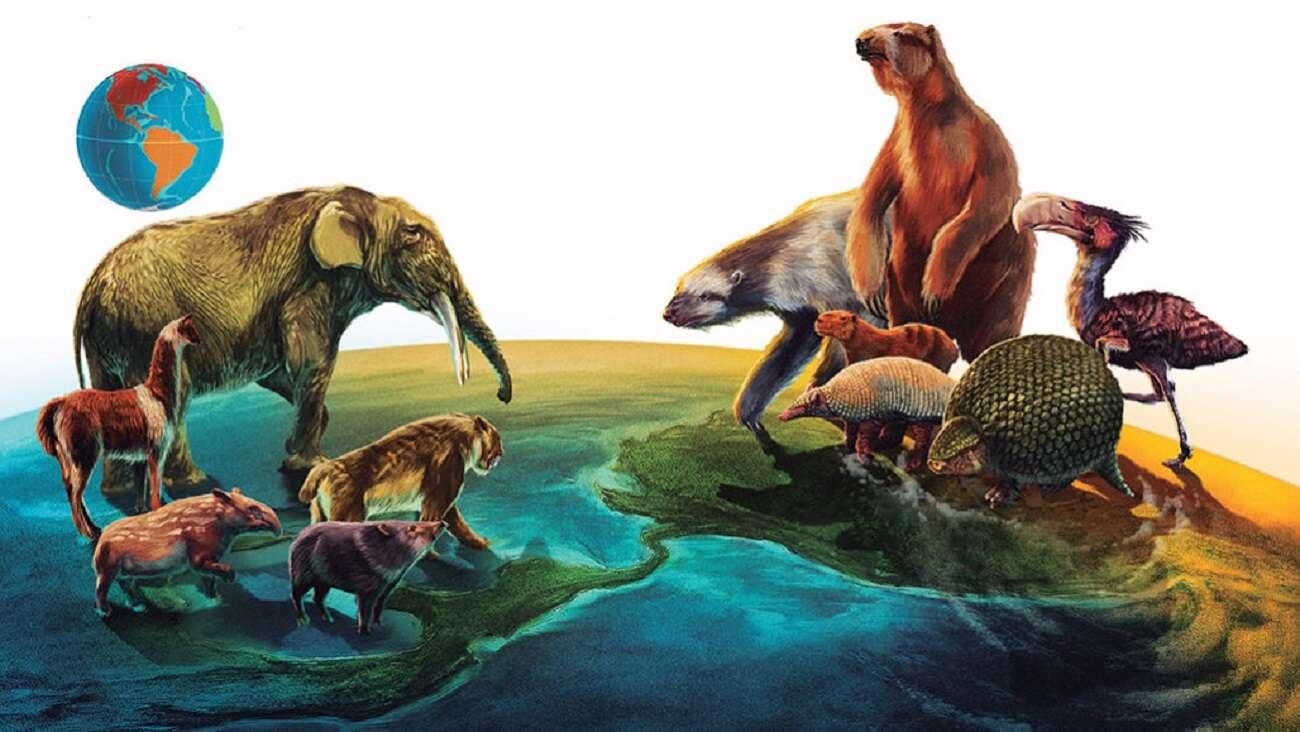 Dlaczego migracja ssaków w Amerykach zadziwia naukowców?