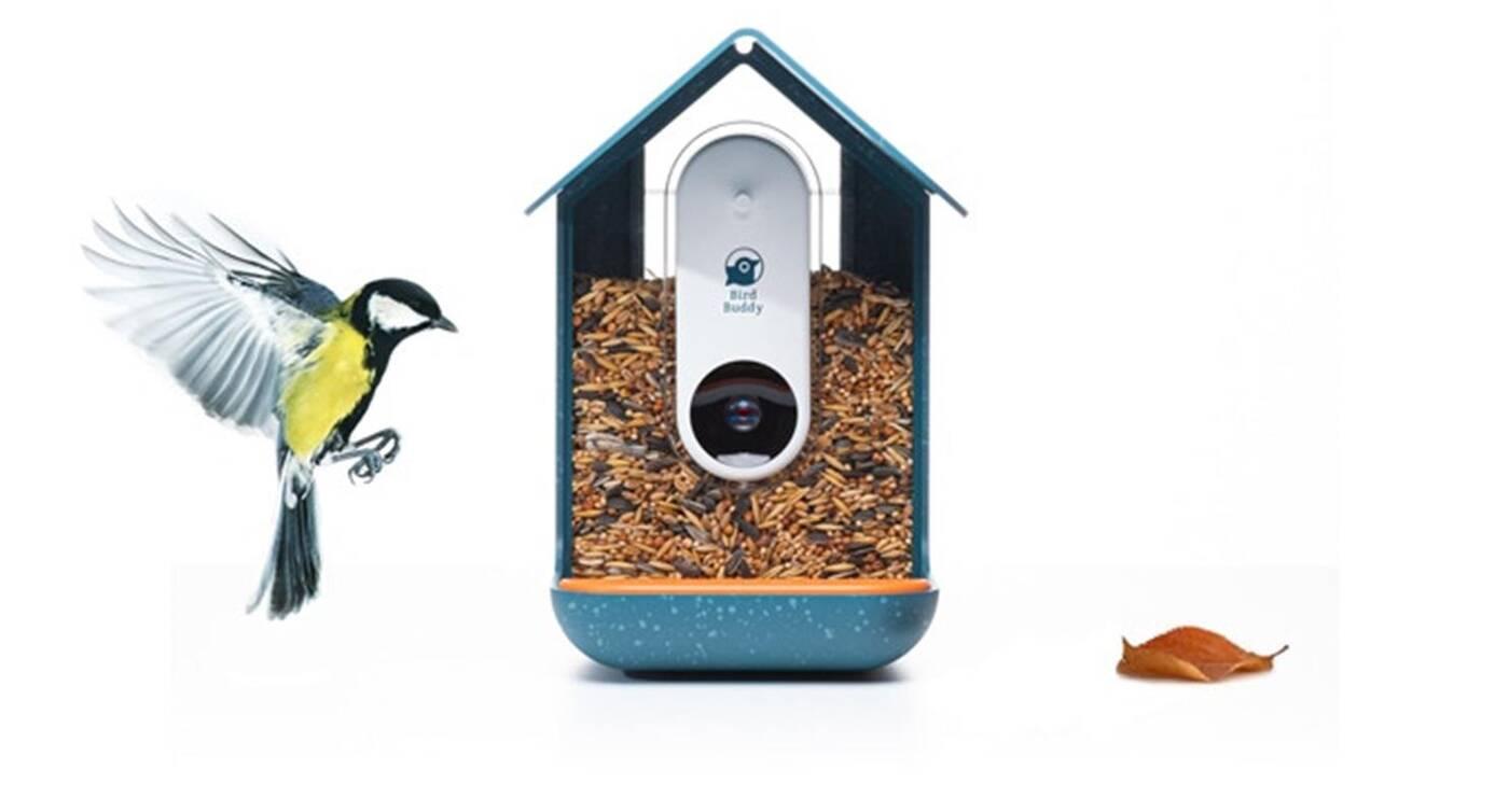 Nowoczesny karmnik dla ptaków Bird Buddy zarobił miliony