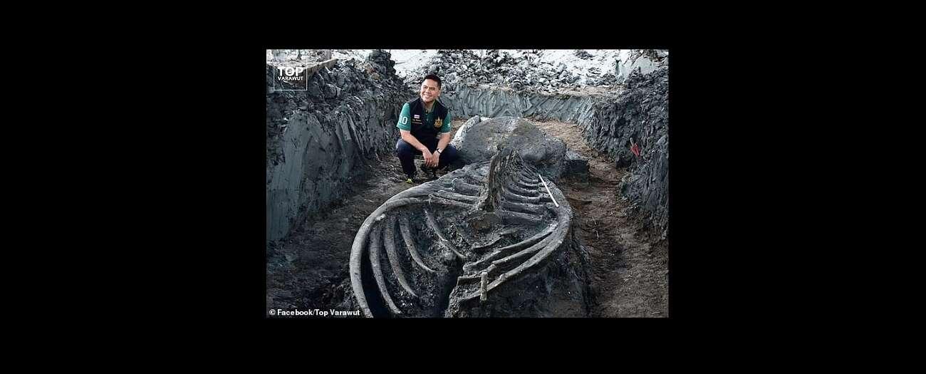 12-metrowe zwierzę sprzed tysięcy lat. Co to za gatunek?