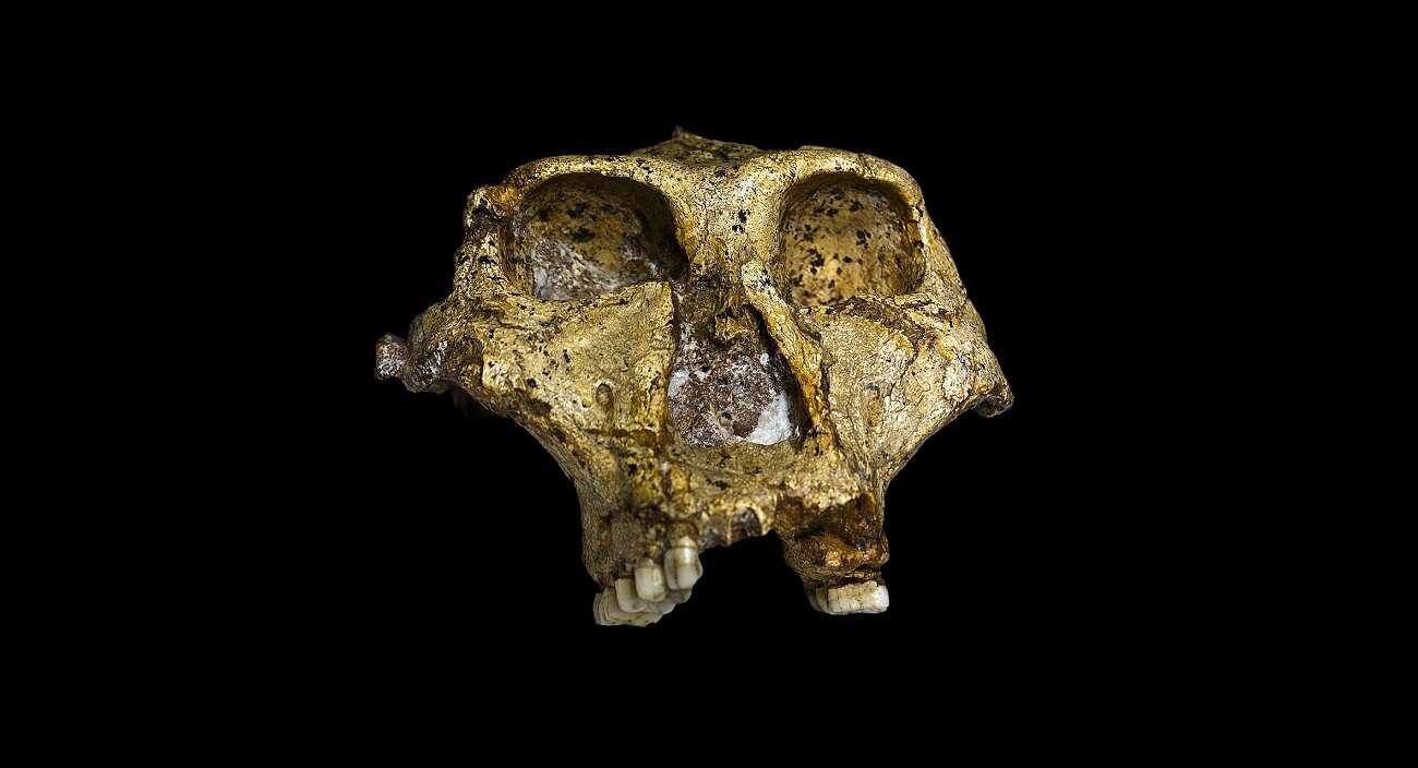 Przodkowie ludzi w niesłychany sposób przystosowali się do zmian klimatu