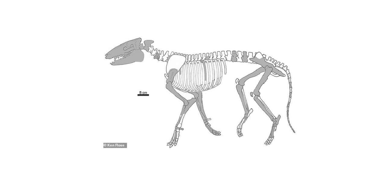 Skąd się wzięły konie? Oto ich prawdopodobnie najstarszy przodek