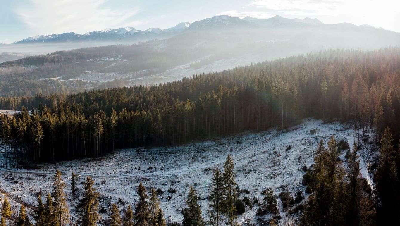 Volvo Car Poland zasadzi las. Ty zdecyduj gdzie!