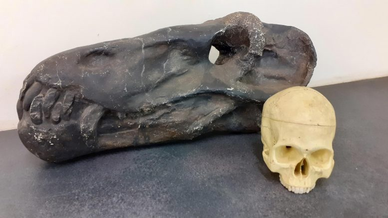 Ten dinocefal sprzed 260 milionów lat był urodzonym zabójcą