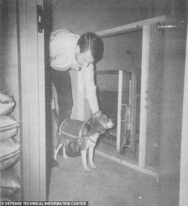 CIA próbowała stworzyć zdalnie sterowane psy. Kulisy eksperymentu szokują