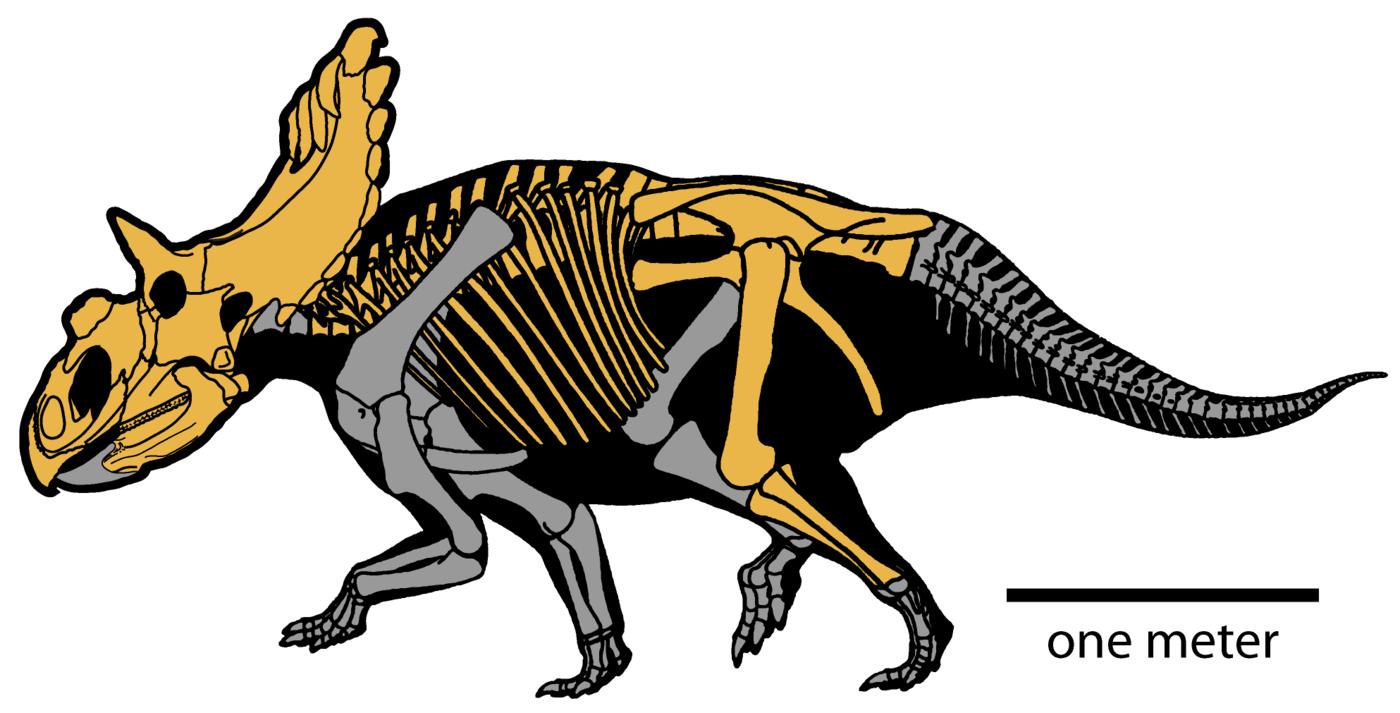 Dziwne dinozaury - top 10