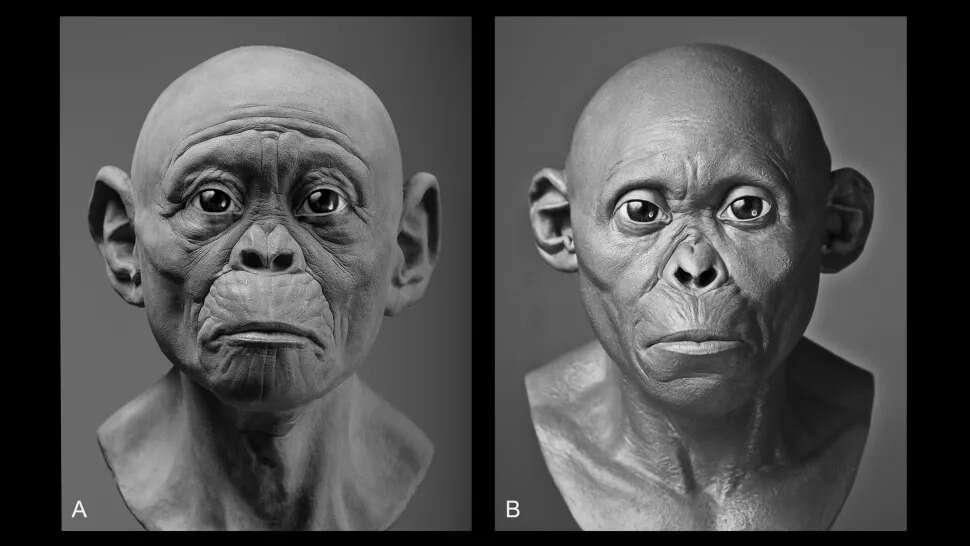 Lucy ma zrekonstruowaną twarz. Jak wyglądał nasz przodek sprzed 3 mln lat?
