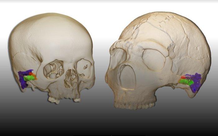 Jaka była mowa neandertalczyków? Wnioski z nowych badań Was zaskoczą