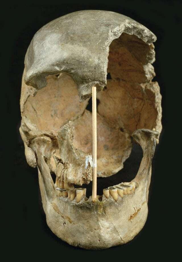 Czaszka sprzed 45 tysięcy lat dostarczyła dowodów na krzyżowanie z neandertalczykami. Sensacyjne znalezisko tuż przy polskiej granicy