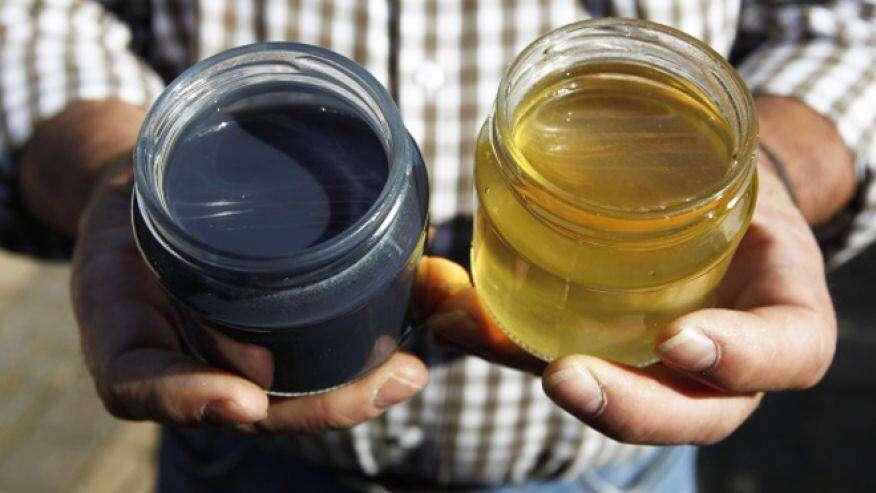 Pszczoły produkują niebieski miód po zjedzeniu M&M's