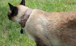 Kot podkradający informację o WiFi sąsiadów